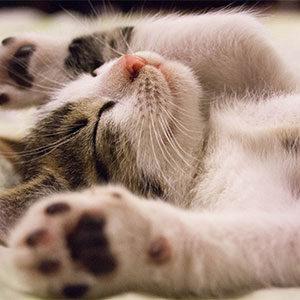 tengo sueño por el dia castellon